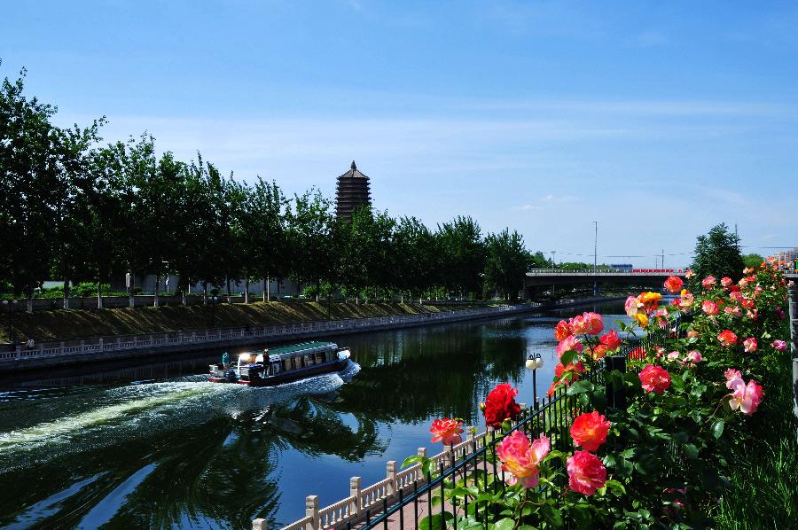公园和大片的月季花种植园